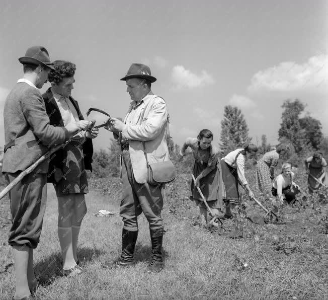 Mezőgazdaság - Gödöllői Erdőgazdaság máriabesnyői csemetekertje