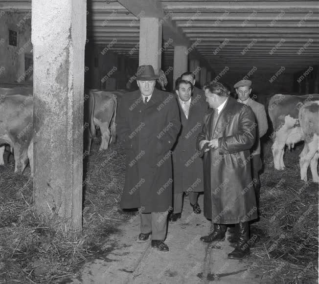 Belpolitika - Kádár János látogatása Kővágóörsön
