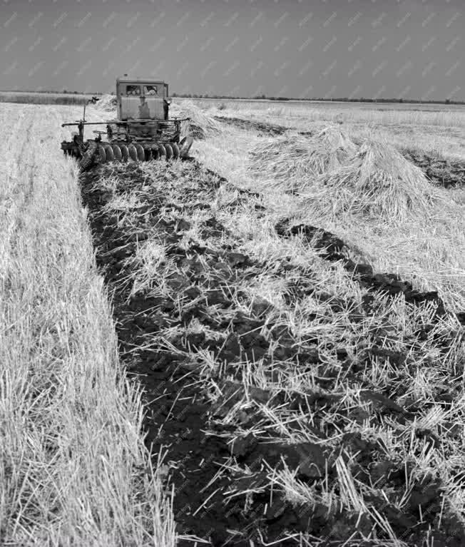 Mezőgazdaság - Aratás a jásztelki Tolbuchin Termelőszövetkben