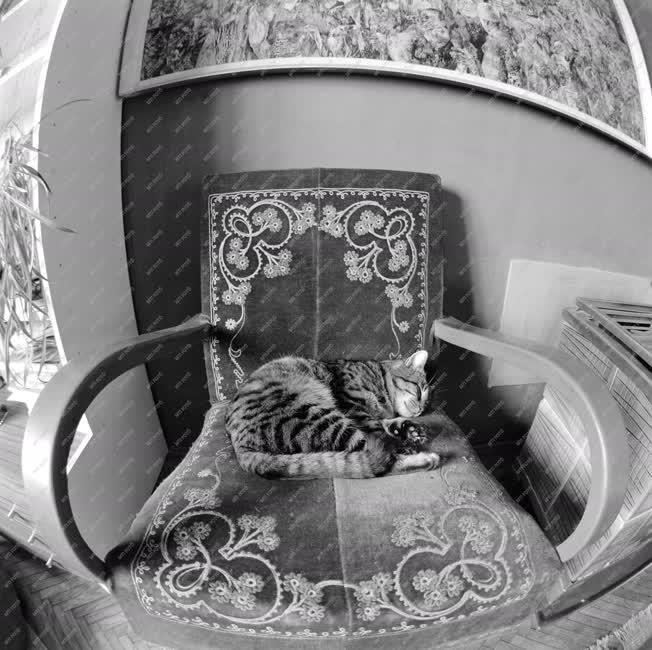 Életkép - Alvó cica Korga György festőművész műtermében