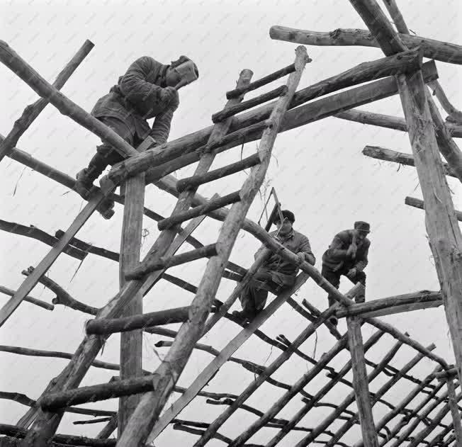 Építőipar - Mezőgazdaság - Csibenevelő építés