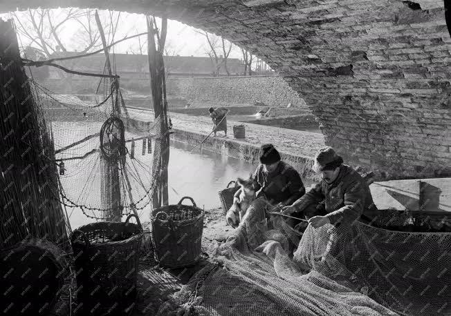 Városkép-életkép - Halászat Tatán