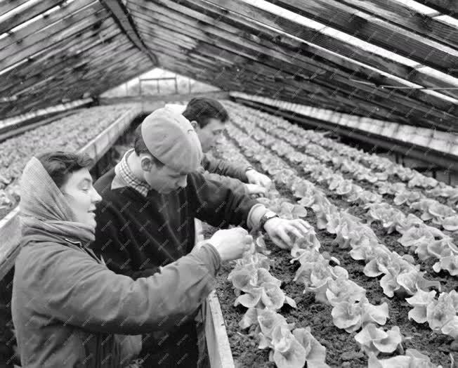 Oktatás - Politechnikai gyakorlat a kertészetben