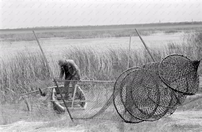 Mezőgazdaság - Halászat