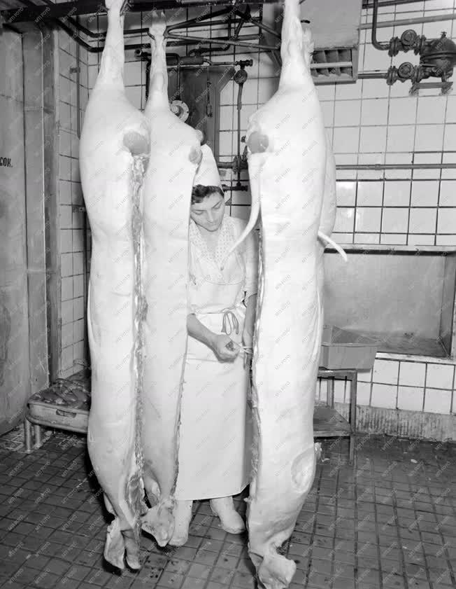 Ipar - Húsipar - Kapuvári húsfeldolgozó üzem