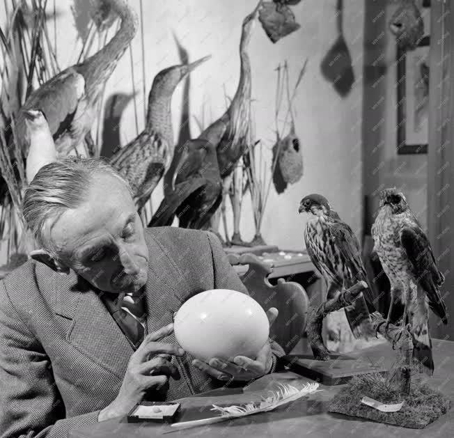 Tudomány - Ornitológia
