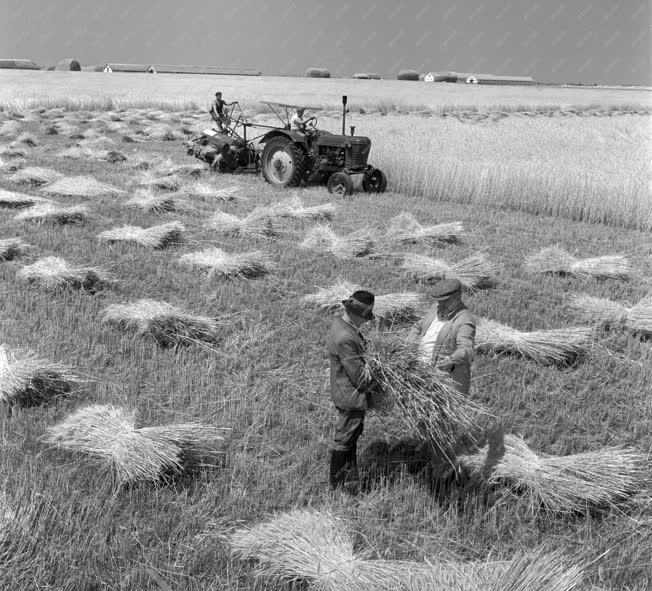 Mezőgazdaság - A nádudvari Vörös Csillag Tsz