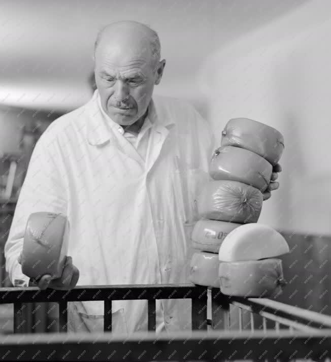 Ipar - Élelmiszeripar - Ementáli tömbök a budafoki sajtüzem