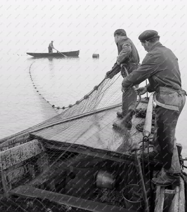 Mezőgazdaság - Balatoni halászok