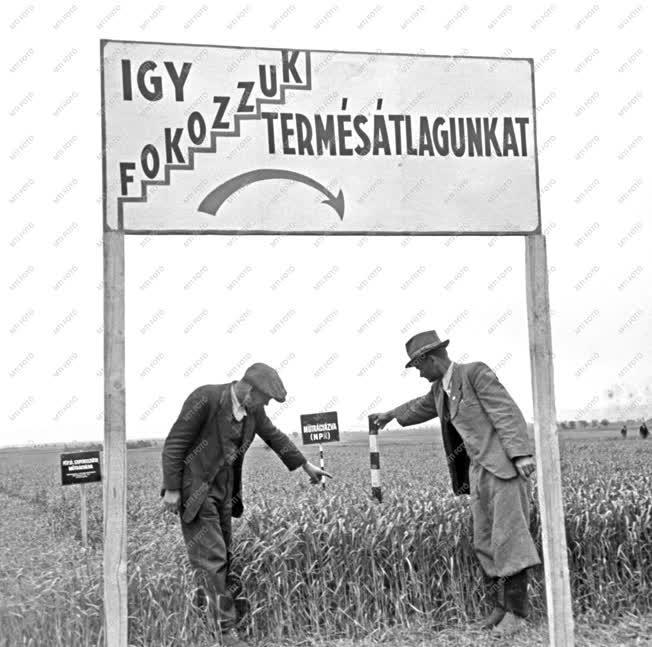Mezőgazdaság - Műtrágyázás 1950-ben