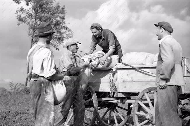 Mezőgazdaság - Műtrűágyázás Somogyjádon