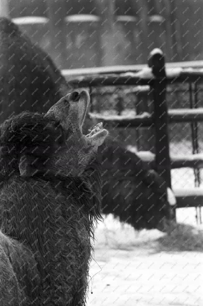 Állatvédelem - Tél az Állatkertben
