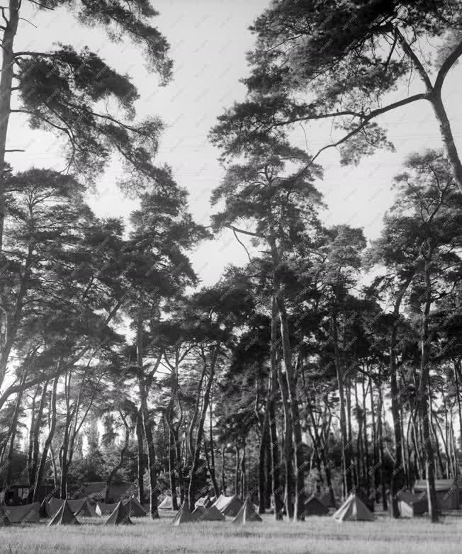 Természet - A debreceni Nagyerdő