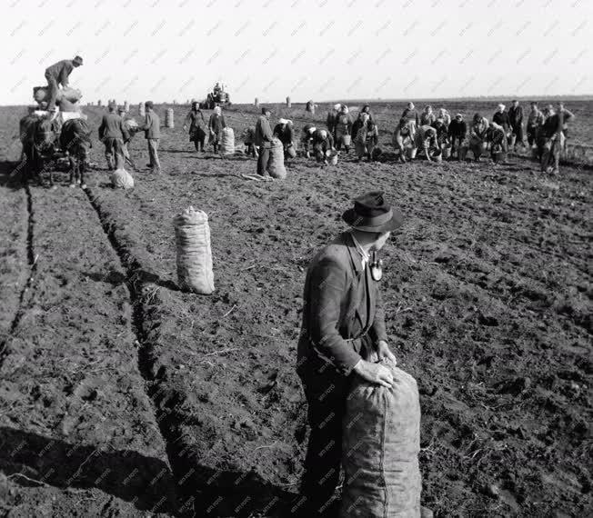 Mezőgazdaság - Őszi munkák Fejér megyében