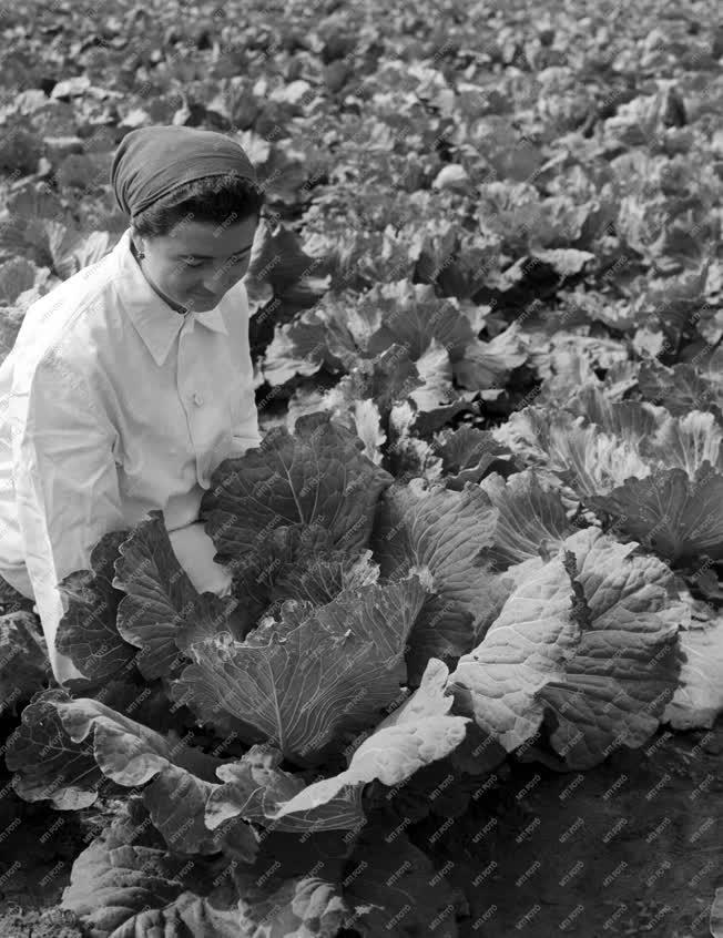 Mezőgazdaság - Kertészeti Kutató Intézet
