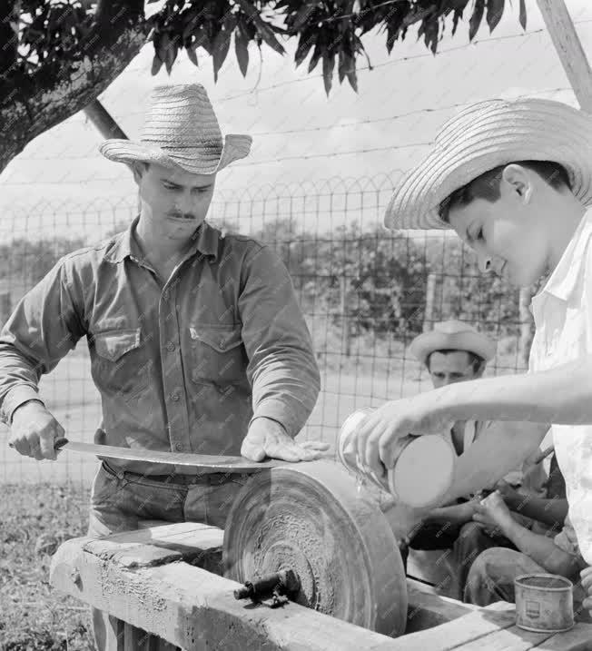 Mezőgazdaság - Kubai földművesek