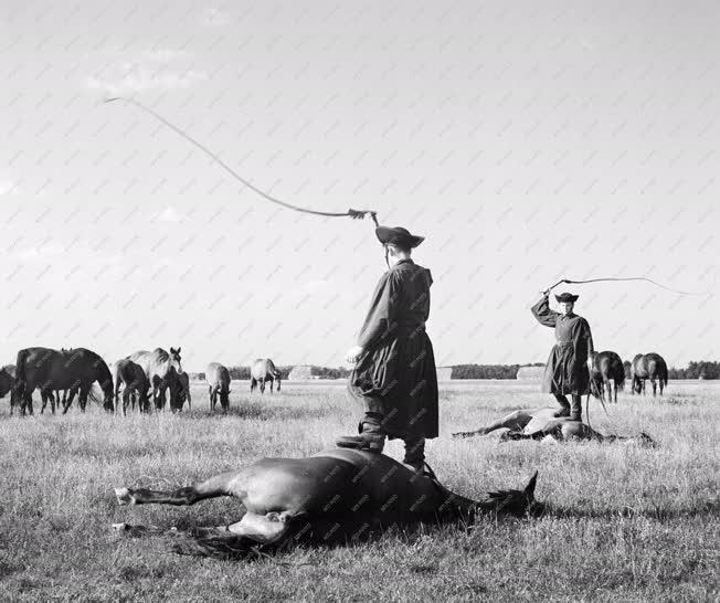 Mezőgazdaság - Csikósok a lovaikkal