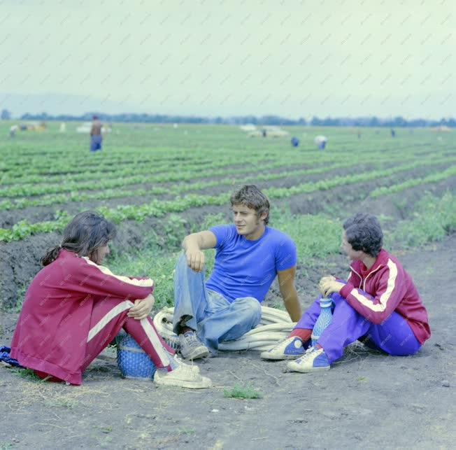 Mezőgazdaság - Szőlőművelők pihenője