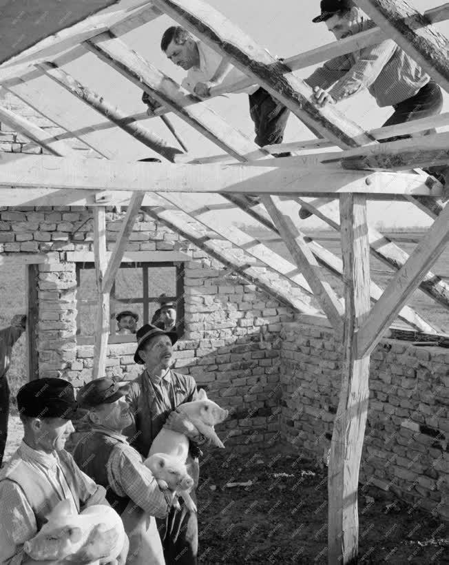 Ipar - Építőipar - Kisiparosok a Kisalföld Tsz-ben