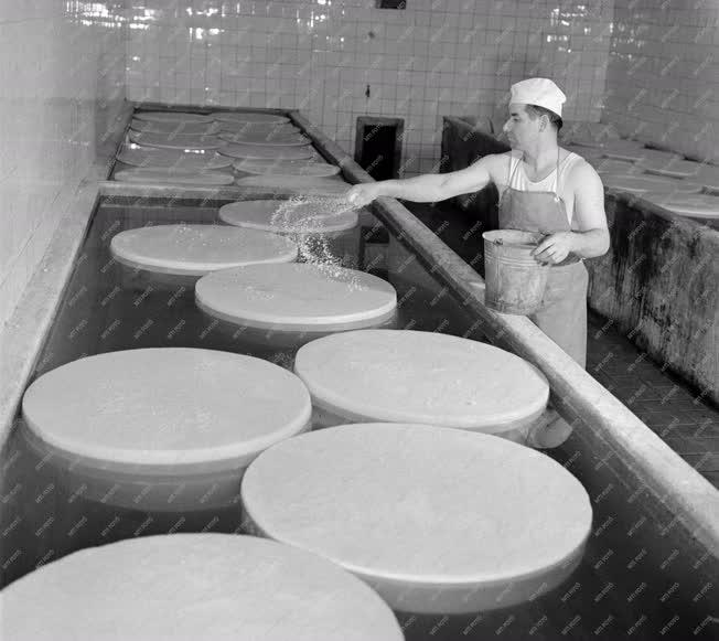 Élelmiszeripar - Zalamegyei Tejipari Vállalat