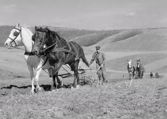 Mezőgazdaság - Bodonyi Mátragyöngye Termelőszövetkezet
