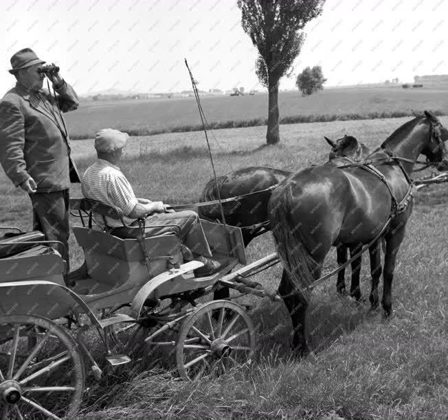 Mezőgazdaság - Balatonnagybereki Állami Gazdaság