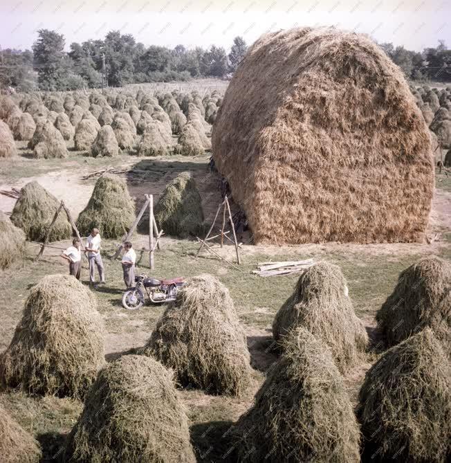 Mezőgazdaság - Betakarítás - Bólyi ÁG
