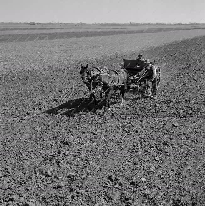 Mezőgazdaság - Vetik a cukorrépát
