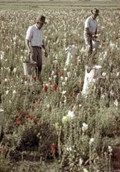 Mezőgazdaság - Növénygyűjtés