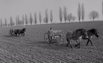 Mezőgazdaság - Tavaszi munkák egy új tsz-ben