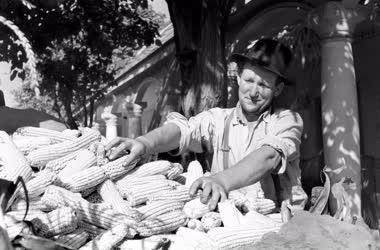 Mezőgazdaság - Betakarítás