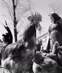 Mezőgazdaság - Alkotmány Termelőszövetkezet