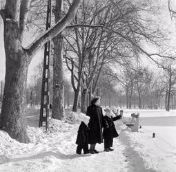 Városkép-életkép - Család a havas Városligetben