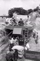 Mezőgazdaság - Rozs cséplése Vas megyében