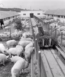Mezőgazdaság - A Közöslét Tsz Baranyában