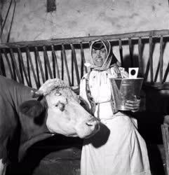 Mezőgazdaság - Állattenyésztés - Rozi tehén és gazdája