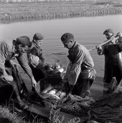 Halászat - Megkezdődött a lehalászás a Szegedi Tógazdaság