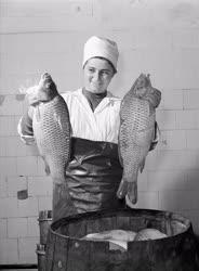 Élelmiszeripar - Halászlé szezon a Szegedi Konzervgyárban