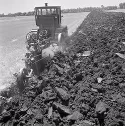 Mezőgazdaság - Nyári mélyszántás a mezőhéki Táncsics tsz-ben