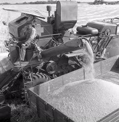 Mezőgazdaság - Kiváló tsz
