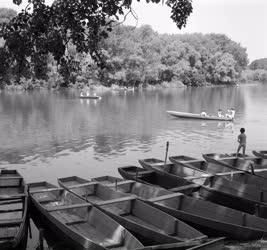 Természet-környezet - Mártélyi Tisza-part