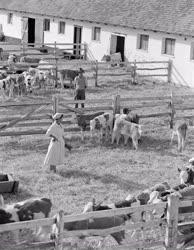 Mezőgazdaság - Kitüntetés - A nádudvari Vörös Csillag Tsz