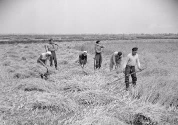 Mezőgazdaság - Mezőgazdasági munka