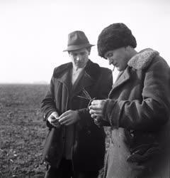 Mezőgazdaság - Növényvizsgálat