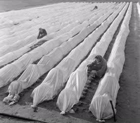 Mezőgazdaság - A soroksári tangazdaságban