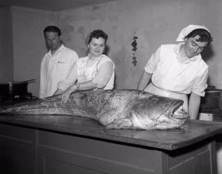 Halászat - Ötven kilós harcsát fogtak a Dunában