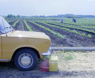Mezőgazdaság - Saját autóval járnak dolgozni a Tsz-tagok