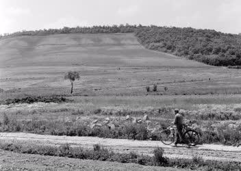 Mezőgazdaság - Borászat - Szőlőtelepítés Szekszárdon