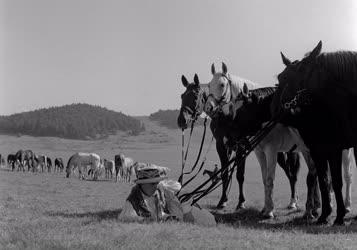 Filmművészet - Filmfelvétel a Magyar Állami Népi Együttes műsorszámairól