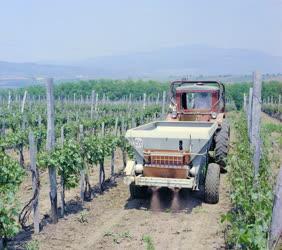 Mezőgazdaság - Szőlőművelés a visontai Reménység Mgtsz-ben